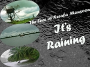 The lure of Kerala Monsoon - It's Raining